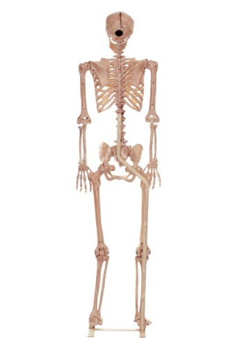 Lifesize Skeleton Metal Stand