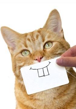 Cats Snap Cat Disguises Alt 3